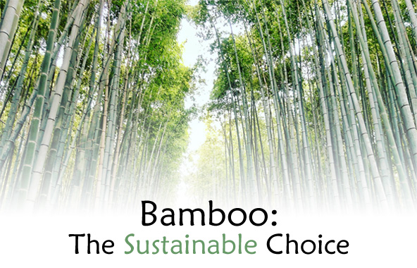Bamboo: The Sustainable Choice