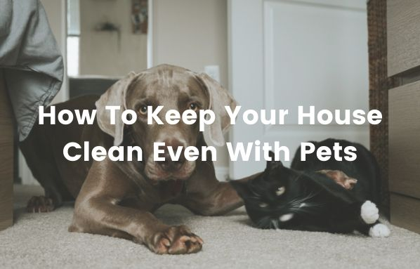 How To Keep Your House Clean Even With Pets